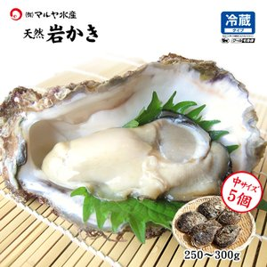 お中元 ギフト 岩牡蠣 (天然 殻付き 生食用) 石川県産 中×5個|maruya