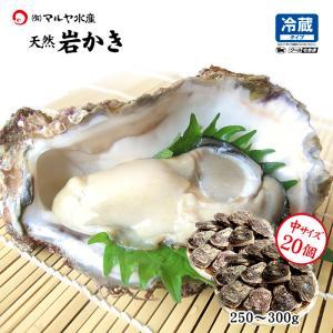 お中元 ギフト 岩牡蠣 (天然 殻付き 生食用) 石川県産 中×20個 殻を開けずそのまま、お得にお届け|maruya