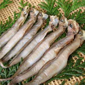 良質のコラーゲンたっぷり幻の干物[石川県産]幻魚(げんげ)の一夜干し:7匹×5セット(水魚/ゲンゲ/ノロゲンゲ/くにゃら)|maruya
