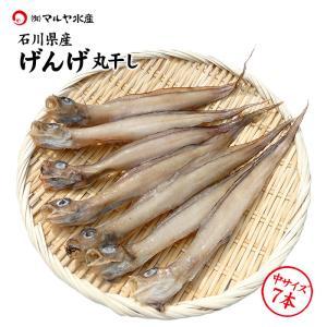 良質のコラーゲンたっぷり幻の干物[石川県産]幻魚(げんげ)の一夜干し:7匹(水魚/ゲンゲ/ノロゲンゲ/くにゃら)|maruya