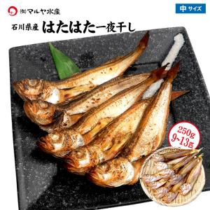 (石川県産)はたはた一夜干し:250g(8〜12匹)|maruya