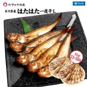(石川県産)はたはた一夜干し:1.0kg詰め合せ(30〜45匹程)|maruya