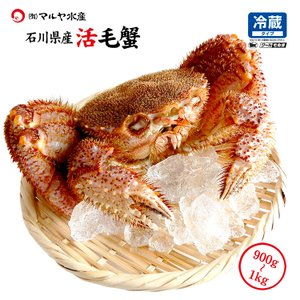 お中元 ギフト 数量限定入荷!活毛蟹 1匹 1.0kg〜900g (石川県産) maruya