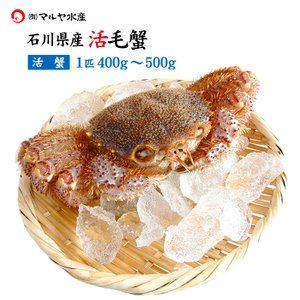 お中元 ギフト 数量限定入荷!活毛蟹 1匹 500g〜400g (石川県産) maruya