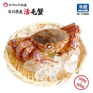 お中元 ギフト 数量限定入荷!活毛蟹 1匹 600g〜500g (石川県産) maruya