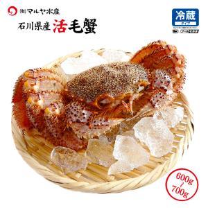 お中元 ギフト 数量限定入荷!活毛蟹 1匹 700g〜600g (石川県産) maruya