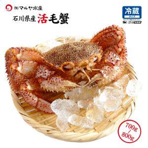 お中元 ギフト 数量限定入荷!活毛蟹 1匹 800g〜700g (石川県産) maruya