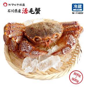 お中元 ギフト 数量限定入荷!活毛蟹 1匹 900g〜800g (石川県産) maruya