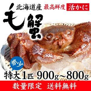 数量限定 特大「活」毛蟹 1匹 900g〜800g (北海道産)