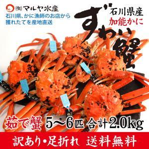 (石川県橋立産)訳あり足折れ ズワイガニ/加能かに:3匹 合計1.0kg以上|maruya