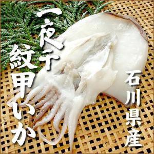 (石川県産)紋甲イカ一夜干し:1枚(100〜130g)|maruya
