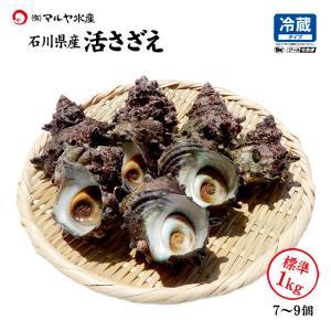 活さざえ 石川県産 中サイズ 1.0kg 7〜9個 詰合せ|maruya