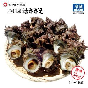 活さざえ 石川県産 中サイズ 2.0kg 14〜19個 詰合せ|maruya