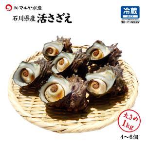 活さざえ 石川県産 大きめ 1.0kg 4〜6個 詰合せ|maruya