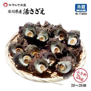 活さざえ 石川県産 小さめ 2.0kg 20〜26個 詰合せ|maruya