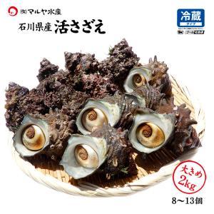 活さざえ 石川県産 大きめ 2.0kg 8〜13個 詰合せ|maruya