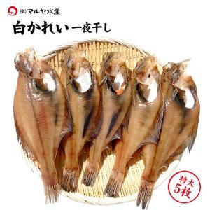 (石川県産)白かれい一夜干し:特大(22〜20cm程)×5枚|maruya