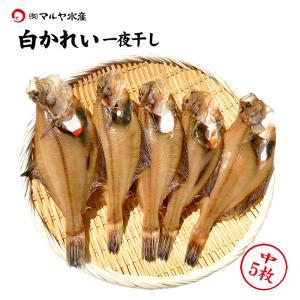 (石川県産)白かれい一夜干し:中(18〜15cm程)×5枚|maruya
