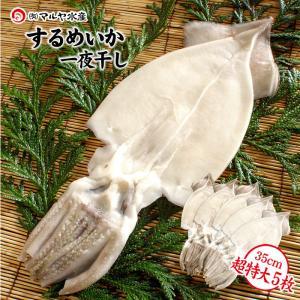 (石川県産)小木漁港水揚げ1本凍結 船凍いか使用 するめいか一夜干し:特大サイズ×5枚セット|maruya