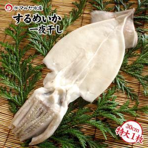 するめいか 干物/一夜干し (石川県産 小木漁港水揚げ1本凍結 船凍いか使用) 特大30cm以上×1枚|maruya