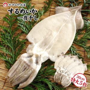 するめいか 干物/一夜干し (石川県産 小木漁港水揚げ1本凍結 船凍いか使用) 特大30cm以上×5枚|maruya