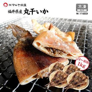(福井県産)熟成わた入り 丸干しイカ(もみいか):3枚〜5枚入り×6袋セット|maruya