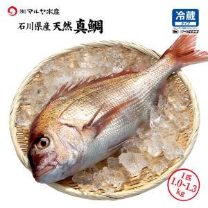(石川県産)お刺身用の天然真鯛:1.0〜1.5kg×1匹|maruya