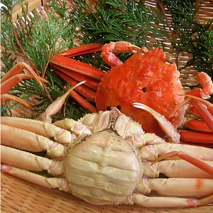 カニ漁解禁!(石川県産)茹で香箱蟹/せいこ:大サイズ×1匹|maruya