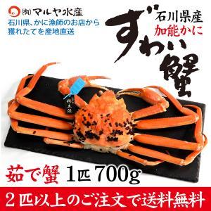 カニ漁解禁!(石川県産)ズワイガニ/加能かに:1匹 800g〜700g|maruya