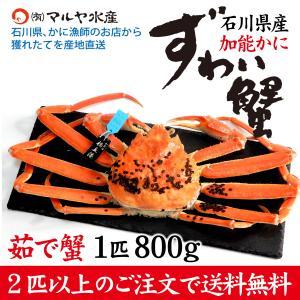 カニ漁解禁!(石川県産)ズワイガニ/加能かに:1匹 800g|maruya