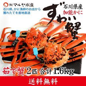 カニ漁解禁!(石川県産)ズワイガニ/加能かに:2匹 合計1.6kg|maruya