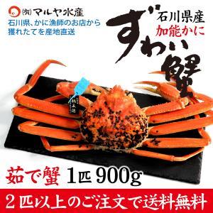カニ漁解禁!(石川県産)ズワイガニ/加能かに:1匹 約900g|maruya