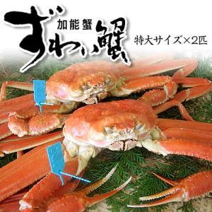 カニ漁解禁!(石川県産)ズワイガニ/加能かに:約1.0kg×2匹|maruya