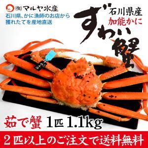 カニ漁解禁!(石川県産)ズワイガニ[加能かに] 極上 特大:1匹 約1.1kg|maruya