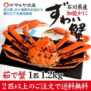 カニ漁解禁!(石川県産)ズワイガニ[加能かに] 極上 特大:1匹 約1.2kg|maruya