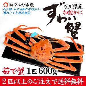 カニ漁解禁!(石川県産)ズワイガニ/加能かに:1匹 600g以上|maruya