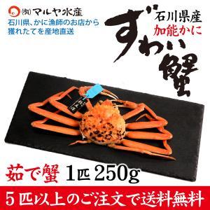 カニ漁解禁!(石川県産)ズワイガニ[加能かに]:1匹 250g前後|maruya