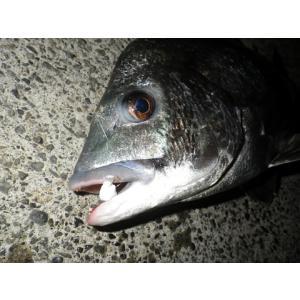 NEVER LATE JAPAN フジツボっち チヌ落とし込み釣りフジツボ型ルアー ゆうパケットでも送れます|masuoka|07