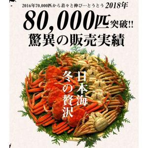 ※ヤフー一番人気で既定数量到達、今季完売御礼※ 日本海せいこかに(セコカニ・香箱蟹・越前/松葉)6-8匹 冬の日本海の美食[競りたて冷蔵直送/2-4人前/送料無料]|masuyone|06