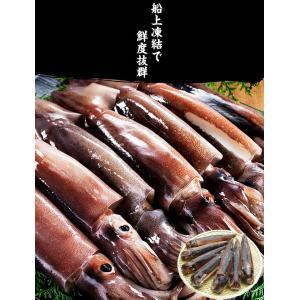 [生スルメイカ  烏賊] 解凍後に吸盤が吸いつく鮮度♪ 日本海産の生するめいか姿 中型×7ハイ 約2kg[生/急速冷凍/冷凍便/送料無料]|masuyone|05
