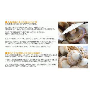 【帆立は昨年年間ベストストア受賞の当店で】北海道噴火湾産 特大ほたて貝ボイル800g 約16〜20粒 [ホタテ/帆立/貝ひも/ミミ/送料無料]|masuyone|05