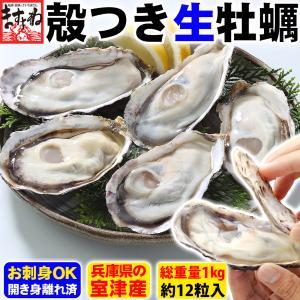 40%OFFクーポン有 牡蠣 かき 国産 生食OK 殻つき牡蠣12粒1kg前後 身離れ済 殻開き済 ...