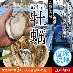 送料無料 宮城県産 殻付き 活牡蠣 3kg ※大小混合で約30~50個【加熱用】