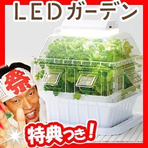 LEDガーデン LED栽培ケース LED室内栽培 LED水耕栽培 土耕栽培 家庭用栽培機 LED家庭菜園 赤白LEDライト付きでよく育つ 植物工場 matsucame
