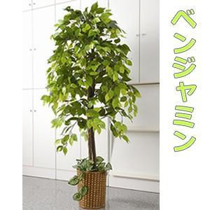 人工観葉植物 ベンジャミン 大型観葉植物 店舗用 リビングにもお勧め 観葉植物 今なら竹製鉢カバー付消 matsucame