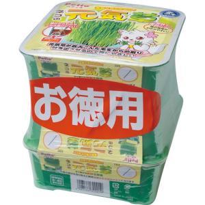 C:ペティオ ネコの元気草 3P 賞味期限:2020/09/30以降(07月現在) matsunami