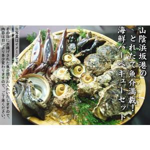 (送料無料)山陰浜坂港とれたて魚介満載 バーベキューセットB |matubagani