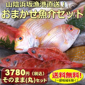 -----------  浜坂港で水揚げされた、とれたての美味しい旬の魚介類を3〜4種程度選んでお届...
