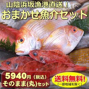 (送料無料)山陰浜坂港直送「朝とれおまかせ鮮魚・魚介5000円(税別)セット」 (海鮮 ギフト 魚介の詰め合わせ)|matubagani
