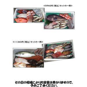 (送料無料)山陰浜坂港直送「朝とれおまかせ鮮魚・魚介5000円(税別)セット」 (海鮮 ギフト 魚介の詰め合わせ)|matubagani|04